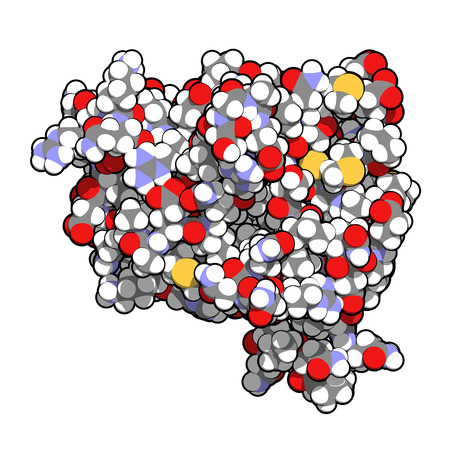 receptor: Anakinra rheumatoid arthritis drug, molecular structure. Recombinant form of human interleukin-1 (IL-1) receptor antagonist protein. Atoms shown as color-coded spheres.