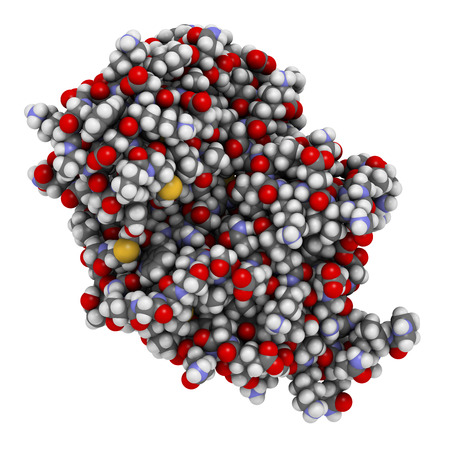 enzyme: Carbapenemase carbapenem antibiotic resistance enzyme. Carbapenemase OXA-24 from the bacterium Acinetobacter baumannii. Atoms shown as color-coded spheres.