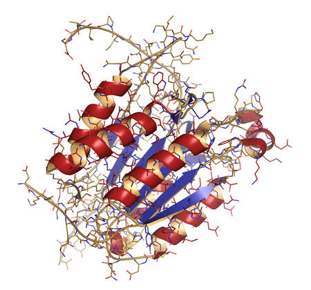 apoptosis: Caspase 3 apoptosis protein. Enzyme that plays important role in programmed cell death. Cartoon + line model; secondary structure coloring: alpha helices red, beta sheets blue. Stock Photo