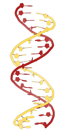 nucleotide: DNA molecular structure. Main carrier of genetic information in all organisms. The DNA shown here is part of a human gene and is shown as a linear double helix. Redyellow cartoon model.