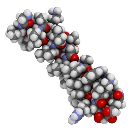 peptide: Melittin peptide toxin. Major component of apitoxin (honey bee venom). Atoms shown as color-coded spheres.