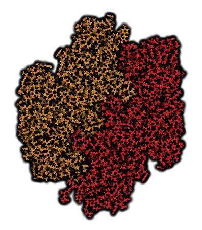 subunits: Coagulation factor XIII (FXIII, A subunits), molecular structure. Crosslinks fibrin after activation to FXIIIa by thrombin. Atoms shown as spheres. Coloring per chain.