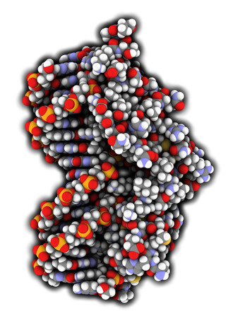 receptor: Glucocorticoid receptor, DNA binding domain bound to a DNA double strand. Atoms shown as color-coded spheres.