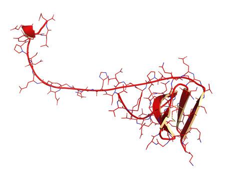 anticoagulant: La hirudina mol�cula de prote�na. Prote�na anticoagulante de sanguijuelas que previene la coagulaci�n de la sangre mediante la inhibici�n de la trombina. Utiliza por v�a t�pica en el tratamiento de hematoma. Cartoon + modelo de l�nea.