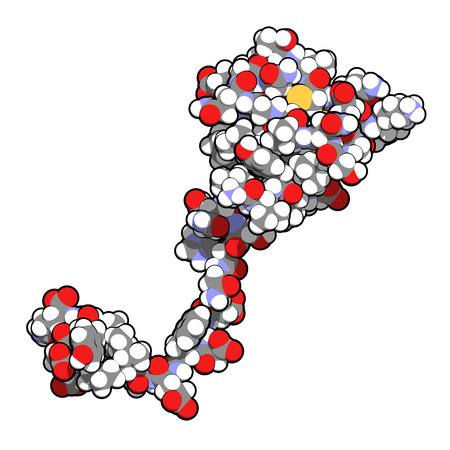 peptide: Hirudin protein molecule. Anticoagulant protein from leeches that prevents blood clotting by inhibiting thrombin. Topically used in treatment of hematoma. Atoms shown as color-coded spheres.