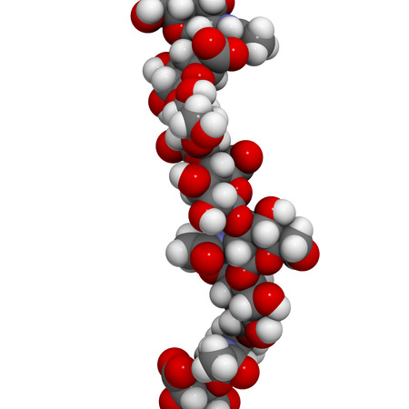 Hyaluronan (Hyaluronsäure, Hyaluronat) Glykosaminoglykan Molekül, kurzes Fragment. Teil der extrazellulären Matrix. Wird als Tumormarker. Verwendet in der Behandlung von Osteoarthritis und als kosmetisches Füllstoff zur Behandlung von Falten. Atome als farbkodierte Kugeln dargestellt. Standard-Bild - 39518104