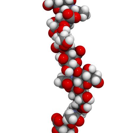 Hyaluronan (hyaluronzuur, hyaluronate) glycosaminoglycan molecule, kort fragment. Een deel van extracellulaire matrix. Gebruikt als tumor marker. Gebruikt bij de behandeling van osteoartritis en als cosmetische vulstof om rimpels te behandelen. Atomen getoond als kleurgecodeerde bollen.
