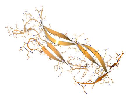Interleukin 17 (IL-17A, IL-17) Zytokin-Molekül. IL-17-Antikörper sind für die Behandlung von Psoriasis und anderen Krankheiten ausgewertet. Cartoon + Linienmodell. Standard-Bild - 39518108