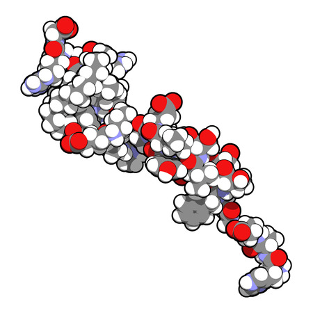 receptor: Liraglutide peptide drug molecule. Agonist of the glucagon-like peptide-1 receptor used in treatment of diabetes and obesity. Atoms shown as color-coded spheres.