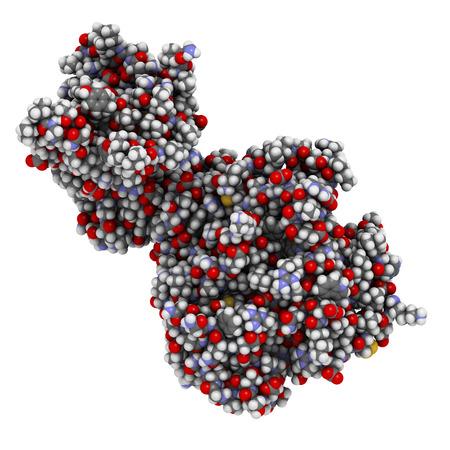 triglycerides: Lipasa pancre�tica (HPL) de la enzima humana, en complejo con colipasa. Realiza primeros pasos en la digesti�n de los triglic�ridos (grasa, aceite) en el duodeno. Los �tomos que se muestran como esferas con c�digos de colores.