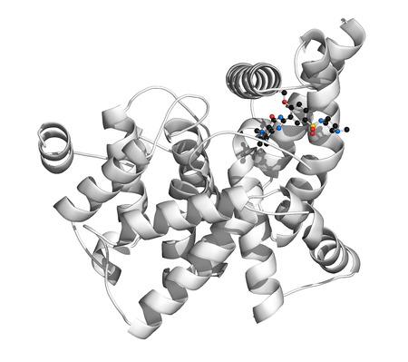dysfunction: Phosphodiesterase 5 (PDE5) enzyme. Inhibition of this enzyme is the mechanism of action of sildenafil, tadalafil and vardenafil, used to treat erectile dysfunction. Sildenafil atoms shown as color-coded spheres; protein shown as cartoon model.