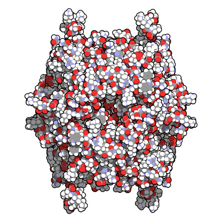 peptide: Rasburicase (recombinant urate oxidase) enzyme molecule. Used to treat and prevent tumor lysis syndrome (TLS). Atoms shown as color-coded spheres. Stock Photo