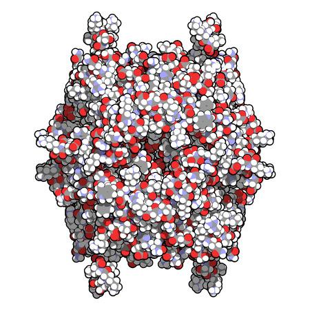 recombinant: Rasburicase (urato ossidasi ricombinante) molecola enzimatica. Usato per trattare e prevenire la sindrome da lisi tumorale (TLS). Atomi mostrati come sfere di colore.