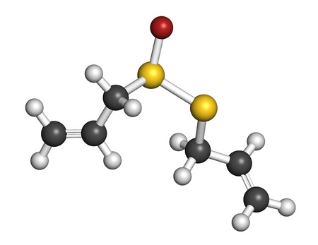 alliaceae: Allicin garlic molecule. Formed from alliin by the enzyme alliinase. Believed to have a number of positive health effects. Atoms are represented as spheres with conventional color coding: hydrogen (white), carbon (grey), oxygen (red), sulfur (yellow). Stock Photo