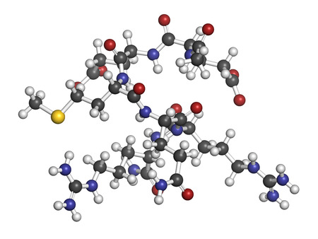 peptide: Acetyl hexapeptide-3 (argireline) molecule. Peptide fragment of SNAP-25. Used in cosmetics to treat wrinkles. Atoms are represented as spheres with conventional color coding: hydrogen (white), carbon (grey), oxygen (red), nitrogen (blue), sulfur (yellow).