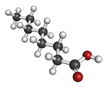 rancid: Caprylic (octanoic) acid. Medium-chain fatty acid, used as antimicrobial agent, food supplement and chemical intermediate. Atoms are represented as spheres with conventional color coding: hydrogen (white), carbon (grey), oxygen (red).