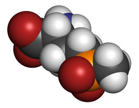transgenic: Glufosinate (phosphinothricin) nonselective herbicide molecule. Transgenic (GMO) crops have been created that are resistant to glufosinate. Atoms are represented as spheres with conventional color coding: hydrogen (white), carbon (grey), oxygen (red), nit Stock Photo