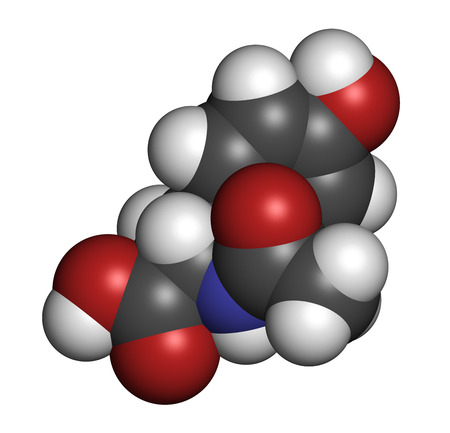 N-acetyl-tyrosine (NALT) molecule. Acetylated form of the amino acid tyrosine. Atoms are represented as spheres with conventional color coding: hydrogen (white), carbon (grey), oxygen (red), nitrogen (blue).