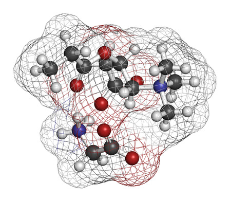 glycine: GPLC (glycine propionyl-L-carnitine) nutritional supplement molecule.  Atoms are represented as spheres with conventional color coding: hydrogen (white), carbon (grey), oxygen (red), nitrogen (blue). Stock Photo