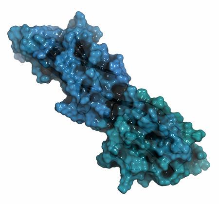 apoptosis: Programado 1 (PD-L1) de prote�na-ligando de muerte. Producido por el tumor para suprimir el sistema inmunol�gico. Bloqueadores de la PD-L1 y PD-1 interacci�n son una nueva clase importante medicamento contra el c�ncer. La representaci�n de la historieta combinado con superficies semitransparentes.