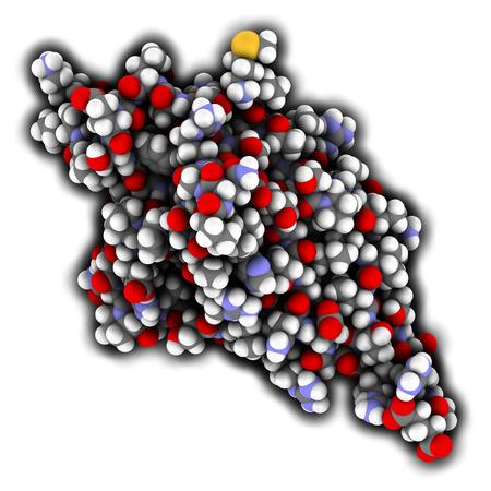 apoptosis: La muerte celular programada 1 (PD-1, CD279) prote�na receptora. PD-1 es un objetivo importante medicamento contra el c�ncer. Los �tomos se representan como esferas con codificaci�n de color convencional.