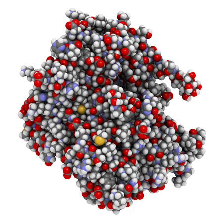 biomarker: Prostatic acid phosphatase (PAP) protein. Biomarker of prostate cancer. Atoms are represented as spheres with conventional color coding. Stock Photo