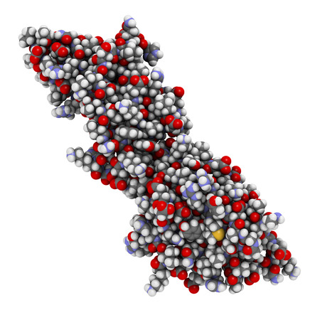 peptide: Programmed death-ligand 1 (PD-L1) protein. Produced by tumor to suppress the immune system. Blockers of the PD-L1 and PD-1 interaction are an important new anticancer drug class. Atoms are represented as spheres with conventional color coding. Stock Photo