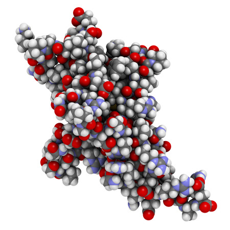 peptide: Programmed cell death 1 (PD-1, CD279) receptor protein. PD-1 is a major cancer drug target. Atoms are represented as spheres with conventional color coding.