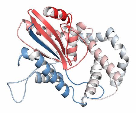 biomarker: Prostatic acid phosphatase (PAP) protein. Biomarker of prostate cancer. Cartoon representation. N-to-C gradient coloring.