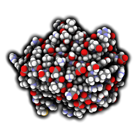 peptide: Von Willebrand factor (A3 domain). Defects and deficiencies cause bleeding diseases. Atoms are represented as spheres with conventional color coding.