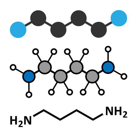 foul: Putrescine foul smelling molecule. Stylized 2D renderings and conventional skeletal formula.