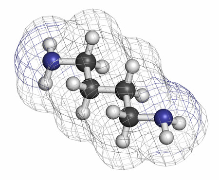 Putrescine foul smelling molecule. Atoms are represented as spheres with conventional color coding: hydrogen (white), carbon (grey), nitrogen (blue).