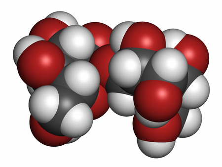 disaccharide: Trehalose (mycose, tremalose) sugar molecule. Atoms are represented as spheres with conventional color coding: hydrogen (white), carbon (grey), oxygen (red).