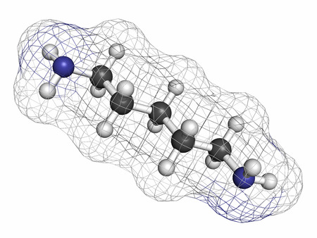 foul: Cadaverine foul smelling molecule. Atoms are represented as spheres with conventional color coding: hydrogen (white), carbon (grey), nitrogen (blue).