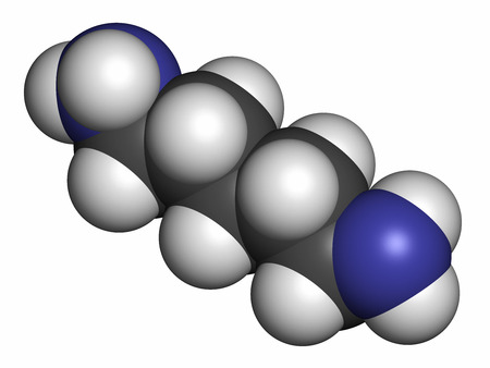 breadth: Cadaverine foul smelling molecule. Atoms are represented as spheres with conventional color coding: hydrogen (white), carbon (grey), nitrogen (blue).