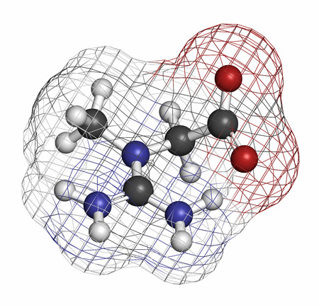 hidrogeno: Creatine molecule. Often used in food supplements. Atoms are represented as spheres with conventional color coding: hydrogen (white), carbon (grey), oxygen (red), nitrogen (blue). Foto de archivo
