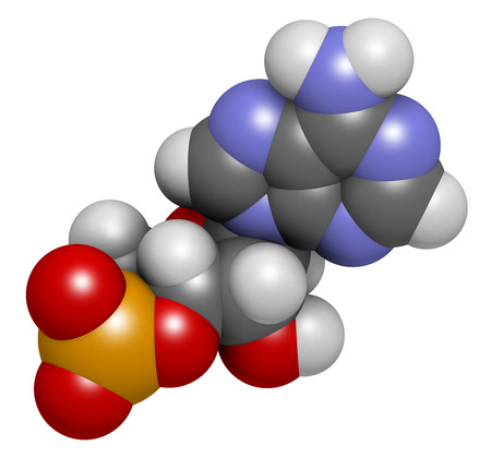 cyclase: Cyclic adenosine monophosphate (cAMP) second messenger molecule. Atoms are represented as spheres with conventional color coding: hydrogen (white), carbon (grey), oxygen (red), nitrogen (blue), phosphorus (orange). Stock Photo