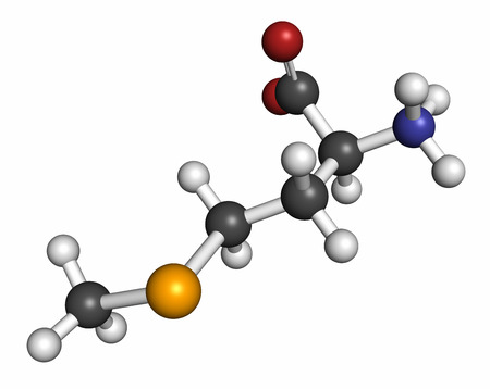selenium: Selenomethionine amino acid molecule. Selenium containing natural analog of methionine. Atoms are represented as spheres with conventional color coding: hydrogen (white), carbon (grey), oxygen (red), nitrogen (blue), selenium (orange). Stock Photo