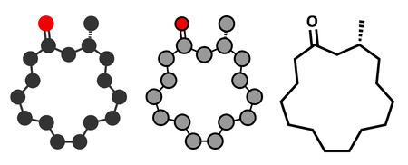 odor: Muscone musk odor molecule. Stylized 2D renderings and conventional skeletal formula. Illustration