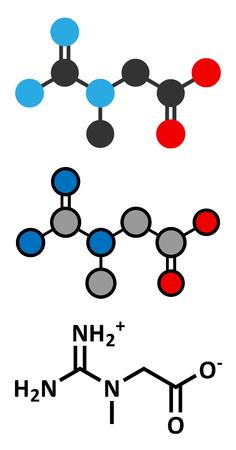 triphosphate: Creatine molecule. Often used in food supplements. Stylized 2D renderings and conventional skeletal formula.