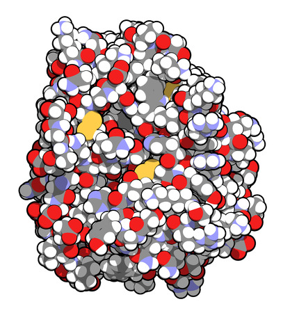 Trypsin digestive enzyme molecule (human). Enzyme that contributes to the digestion of proteins in the digestive system. Atoms are represented as spheres with conventional color coding.