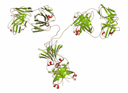 antibodies: IgG2a monoclonal antibody (immunoglobulin). Many biotech drugs are antibodies. Cartoon representation with secondary structure coloring (green sheets, red helices).