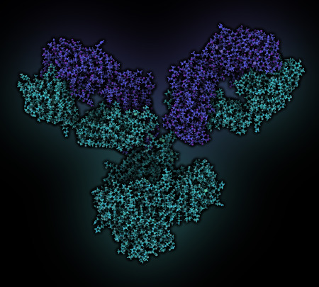 epitope: IgG1 monoclonal antibody (immunoglobulin). Many biotech drugs are antibodies. Atoms are shown as color-coded spheres. Light chain shaded blue, heavy chain cyan. Stock Photo