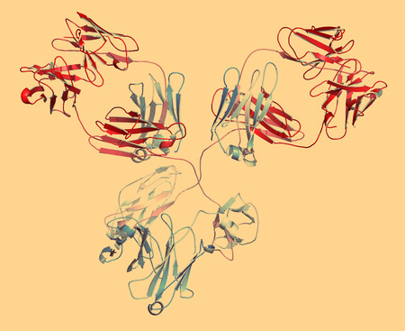 epitope: IgG1 monoclonal antibody (immunoglobulin). Many biotech drugs are antibodies. Cartoon representation with backbone gradient coloring.