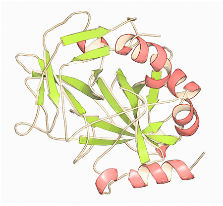 insoluble: Thrombin blood-clotting enzyme: Human alpha-thrombin molecule is a key protein in the blood coagulation cascade. Converts soluble fibrinogen into insoluble fibrin. Cartoon representation with secondary structure coloring (green sheets, red helices). Stock Photo