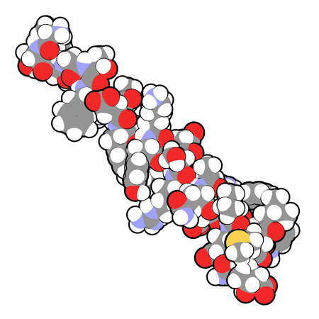 peptide: Glucagon peptide hormone. Has blood sugar level increasing effects, balancing the effect of insulin. Atoms are represented as spheres with conventional color coding.