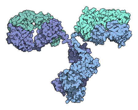 epitope: IgG2a monoclonal antibody (immunoglobulin). Many biotech drugs are antibodies. Atoms are represented as color coded spheres. Per chain coloring.