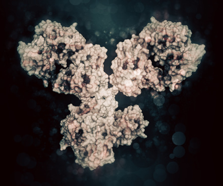 IgG1 monoclonal antibody (immunoglobulin). Many biotech drugs are antibodies. Cartoon representation combined with semi-transparent surfaces.