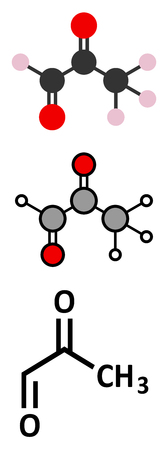 Methylglyoxal (pyruvaldehyde) molecule. Produced by glycolysis; is cytotoxic. Stylized 2D renderings and conventional skeletal formula. Illustration