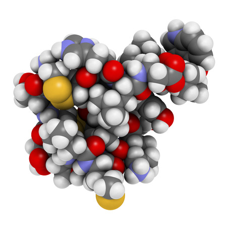 peptide: Endothelin 1 (ET-1) vasoconstrictory peptide molecule. Atoms are represented as spheres with conventional color coding.
